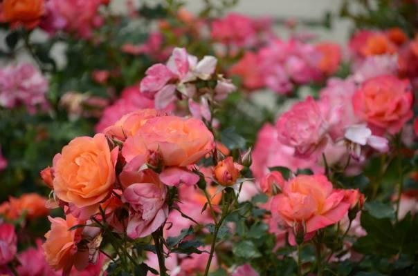 Disneyland flowers