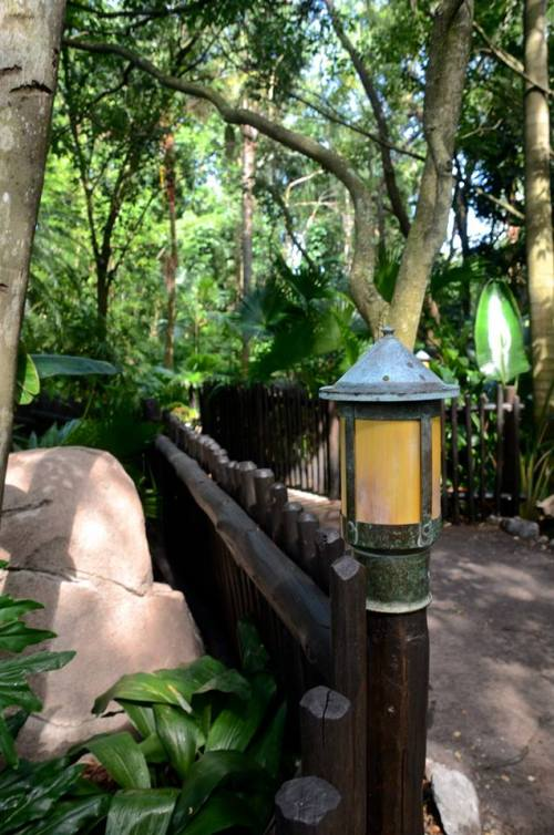 Animal Kingdom light trail