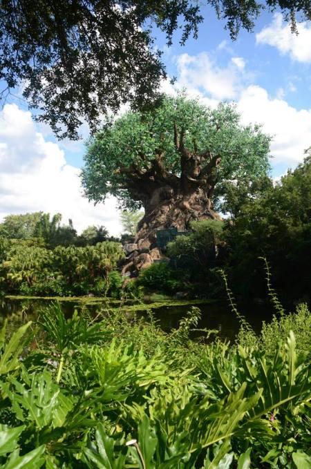 Tree of life open AK