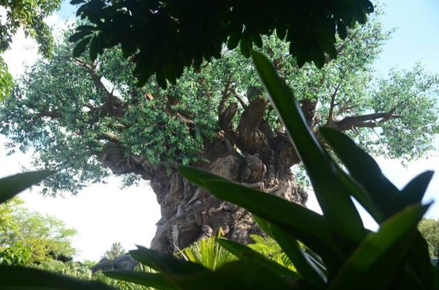 Tree of life trail AK
