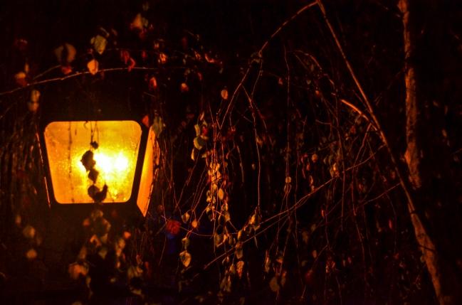 Light with tree limbs